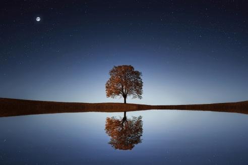 En inre resa till musik kan skapa en inre reflektion likt detta träd som speglas i vattnet.